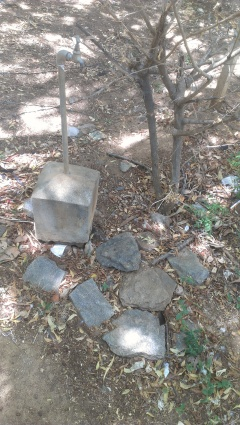 garden tac nagar